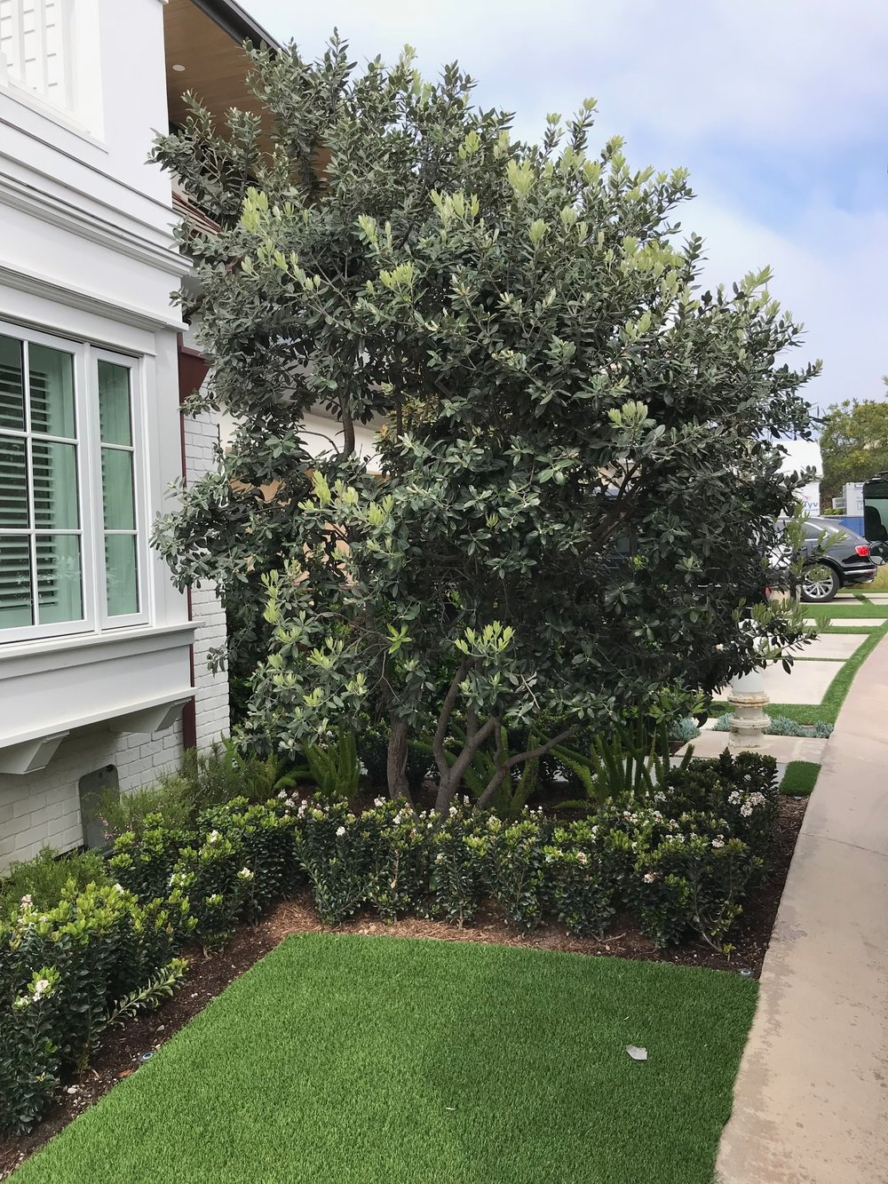 Planted tree after excavation work done in Dana Point, California, United States