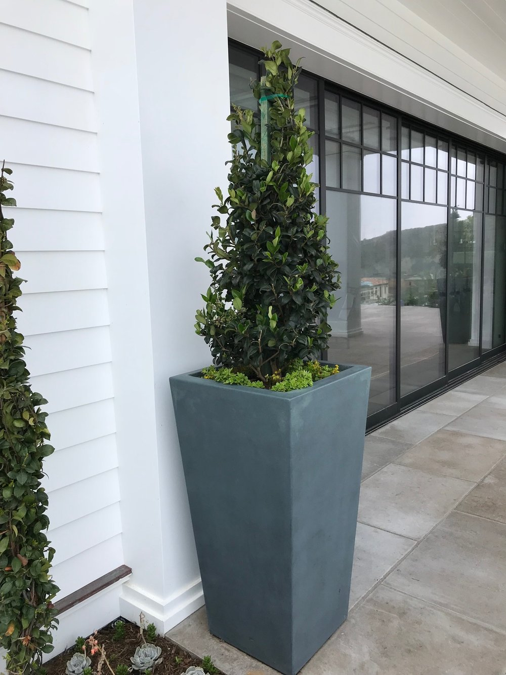 Planting next to the white wall construction in Dana Point