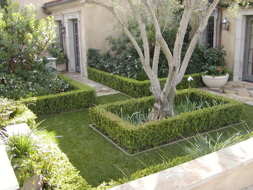 Landscape Construction: What You Need to Know About Specimen Tree Planting in Dana Point, CA