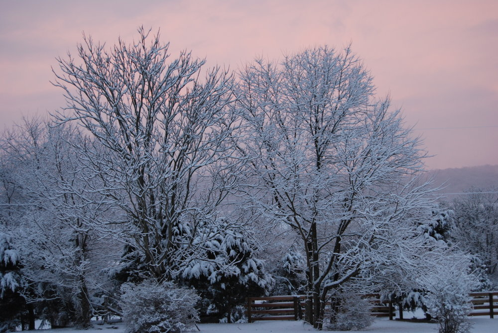 Trees with snow and sunset.JPG