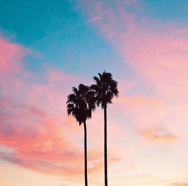 Palms on pink via @kimgenevieve 💕