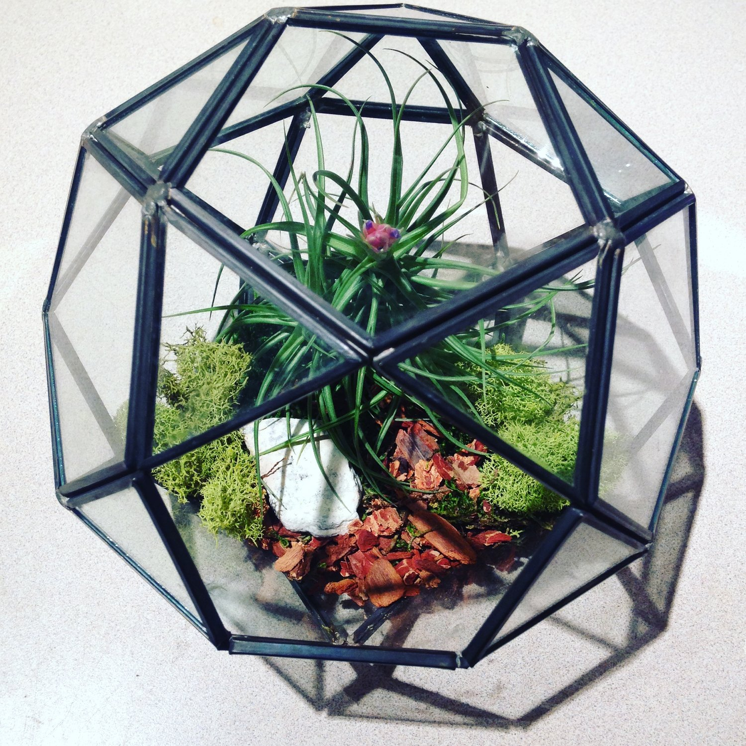 Glass Earth Terrariums And Specialty Plants