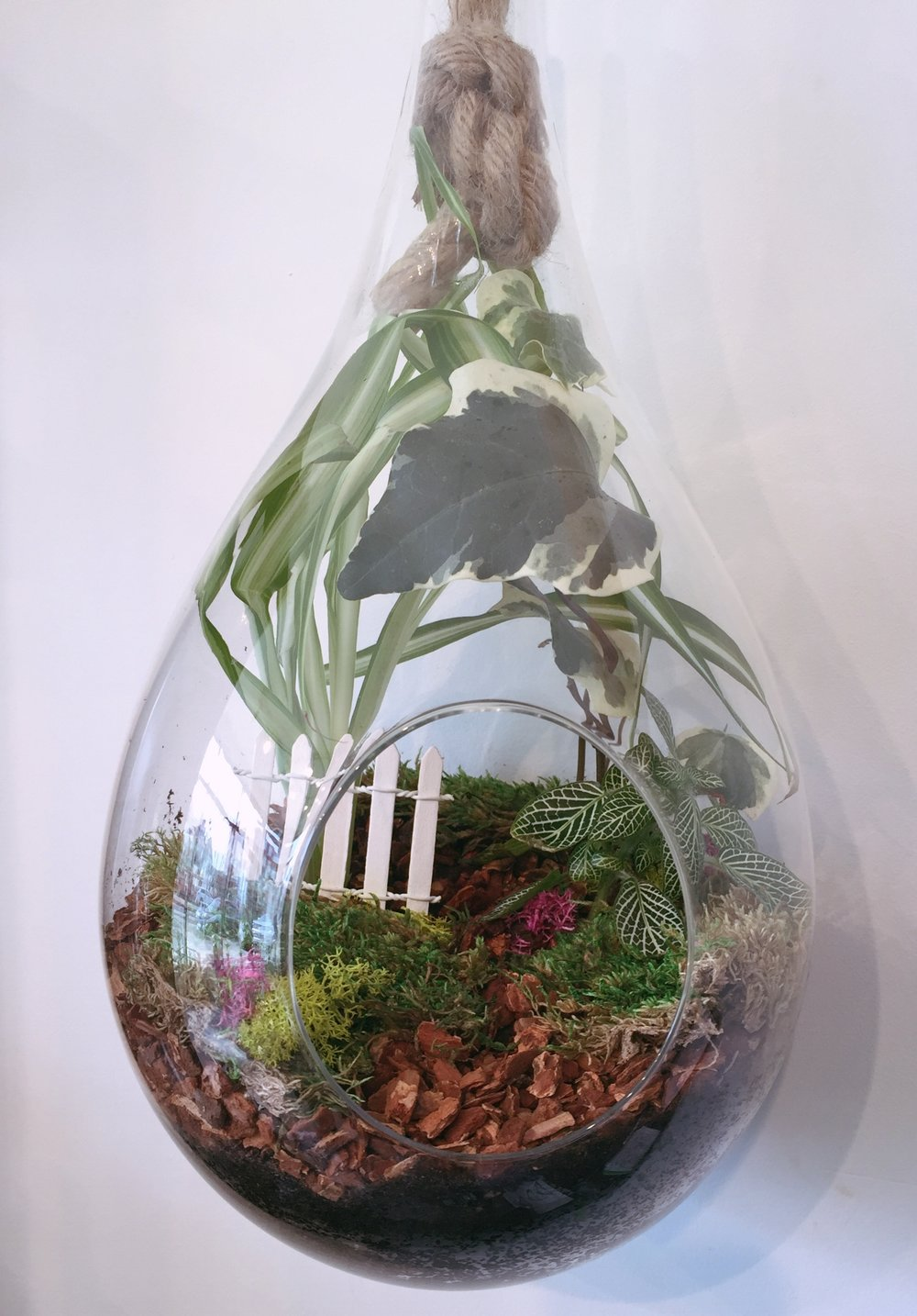 Large Tear Drop Terrarium