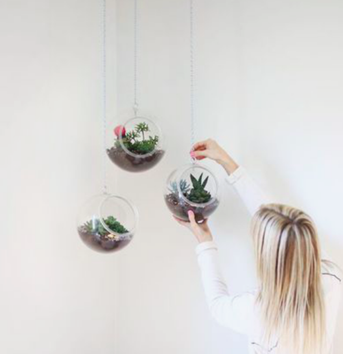 Plant Care Glass Earth