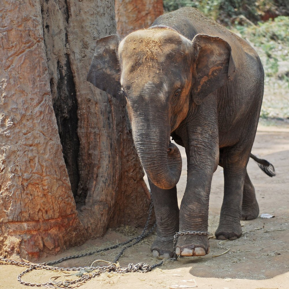 Reiki kurs Elefant