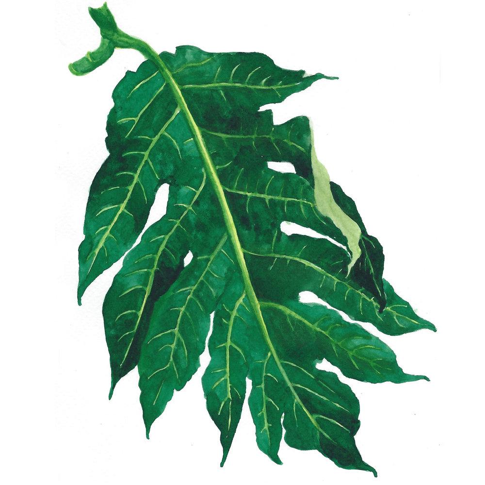 🌿 Leafy Greens 🌿