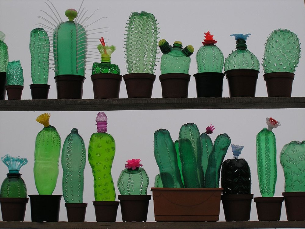 VERONIKA RICHTEROVA -  Cactus collection
