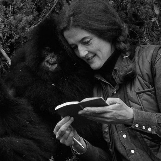 """I remember standing in a K-mart in my hometown as a little one totally fixated on a screen that was playing """"Gorillas in the Mist."""" If you know that film/book than you know of Dian Fossey. She's another one of Dr. Leaky's angels that was sent out to study primates in their natural habitat. Fossey headed to Rawanda (and other parts of Africa) and devoted her life to understanding gorillas🦍+ was an active conservationist. This was her life every day till she was killed for protecting the land + the gorillas.  Her daily devotion to observation + active compassion changed our understanding of the gorillas + helped to protect that land. And, she leaves quite the legacy behind her.  She was deeply rich with love + wisdom + courage. Most importantly, she lived life as she wanted to and in alignment with her soul's calling. She was relentless.  I am so in awe of what she did in her lifetime.  How is devotion showing up in your life right now?  Who exemplifies devotion to you? . . . . . .  #womeninhistory #girlboss #devotion #gorillasinthemist #animallove #prosperity"""