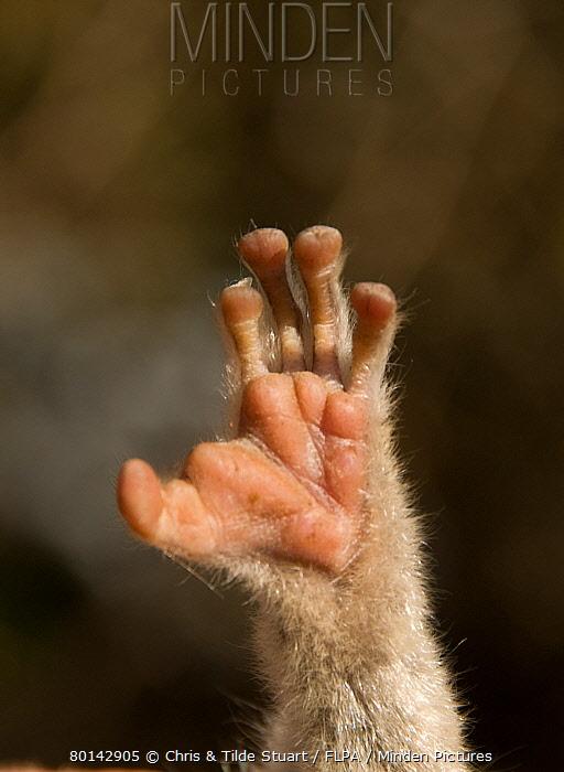 bushbaby foot.jpg