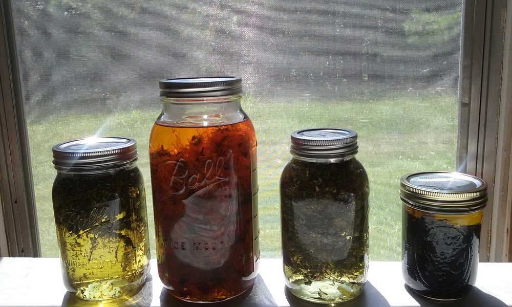 Making herbal oils using the solar infusion method.