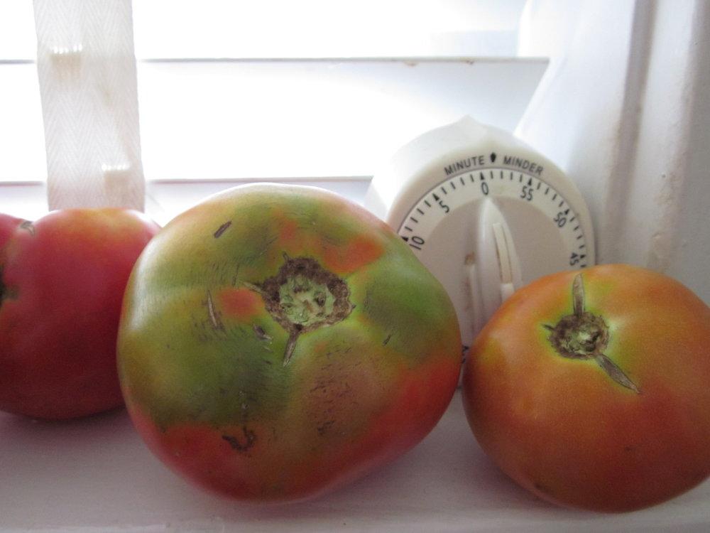 Farmers-market-tomatoes.jpg