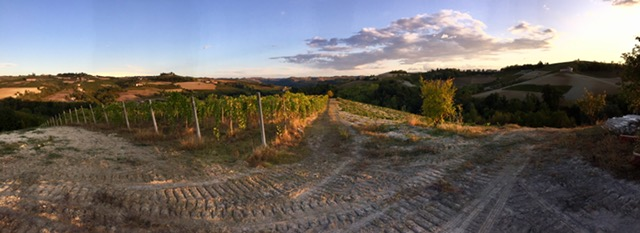 Our view from the vines in Piedmont