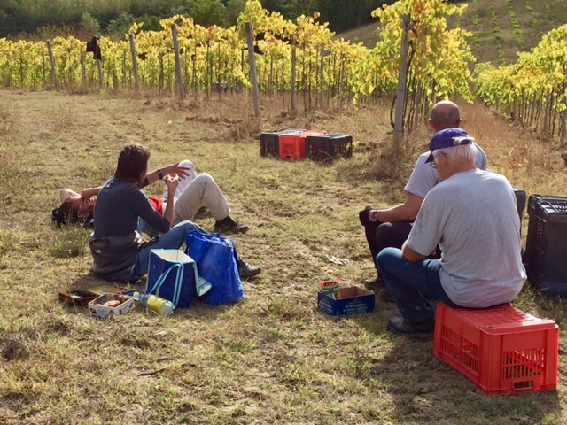 Break time during the grape harvest