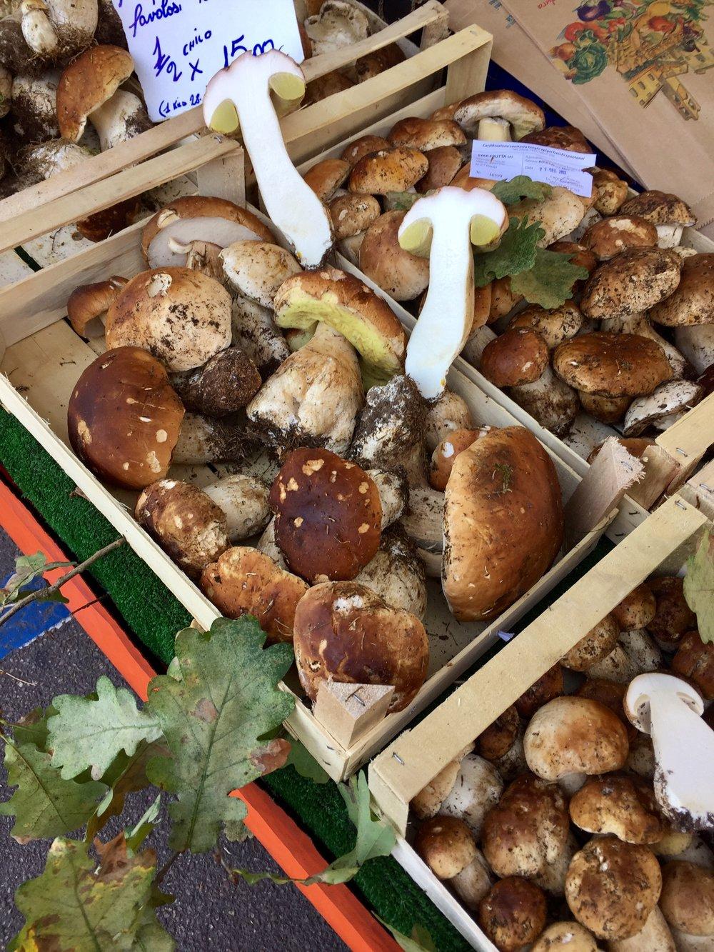 fungi8.jpg