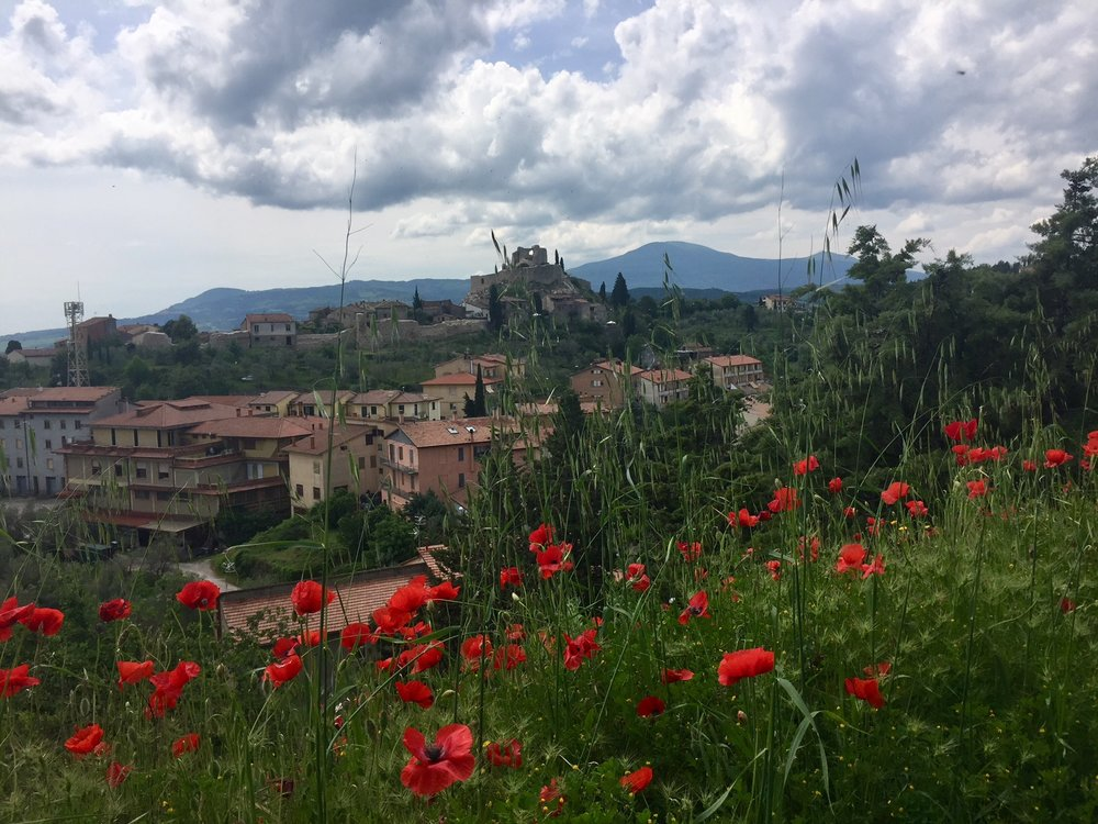 The poppies were in full bloom atop   Rocca d'Orcia