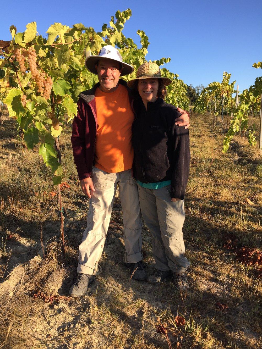 Picking grapes in Dogliani