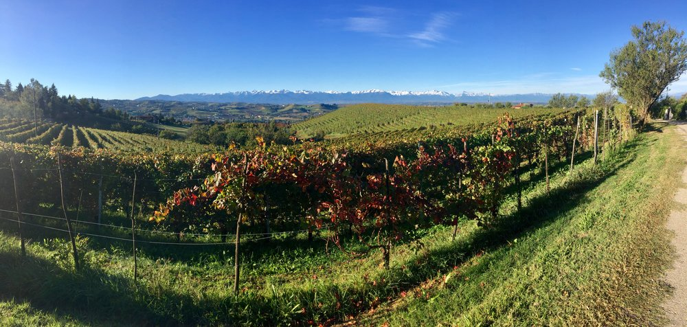 Back on the winery in Dogliani with snow on the Alps. We love touring Piedmont and drinking Barolo wines.