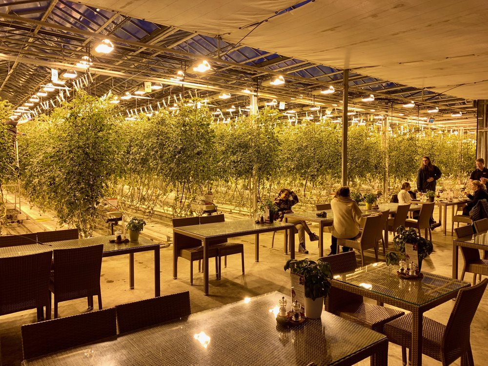 Dining among the tomato plants at Fridheimar