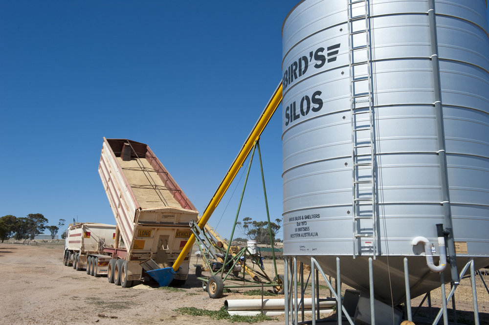 Unloading oats into silo storage (©2017 Government of Western Australia )