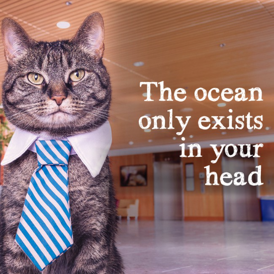 Yeah, ok, cat, or evenly distributed between the continents. Whichever. Also, your brain is the size of a walnut.
