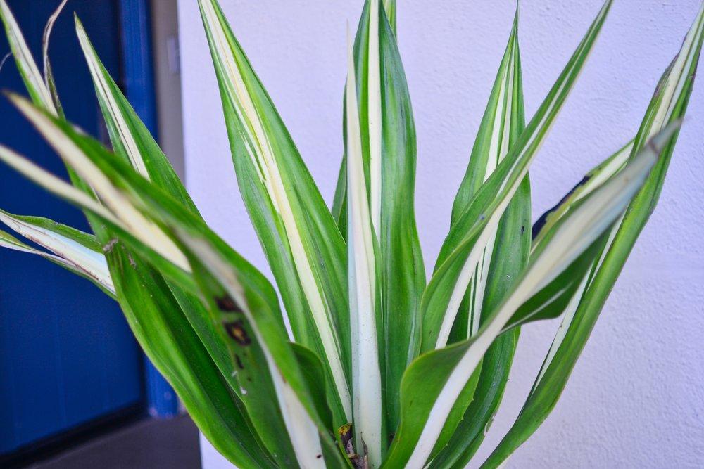 Pippa - plant.jpeg