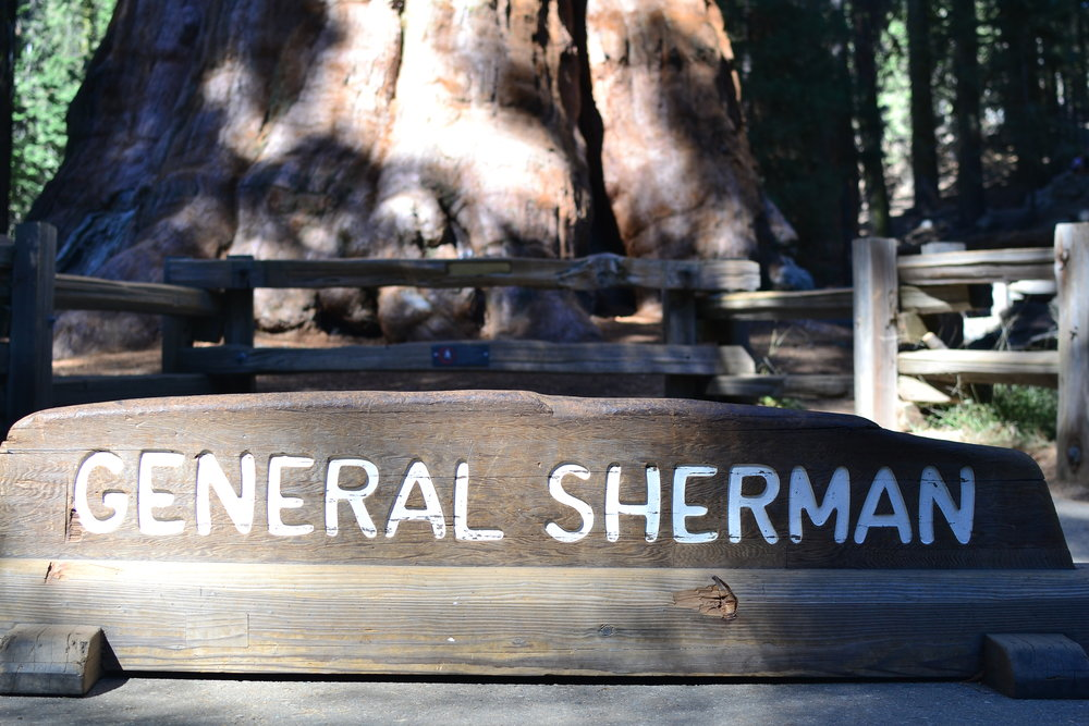General Sherman Tree Sequoia National Park