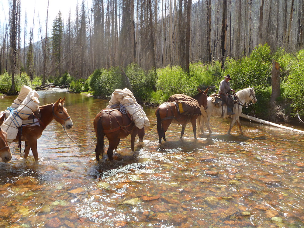 South Fork of the Flathead