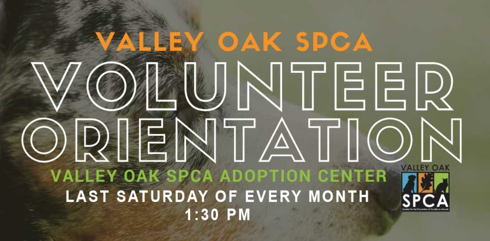 Volunteer Orientation_SATURDAY.png