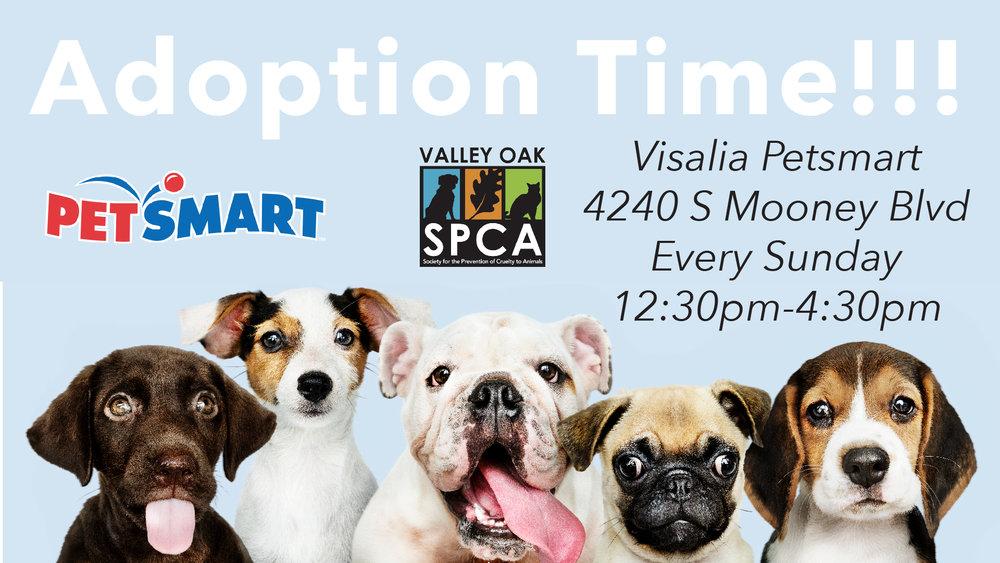 Visalia Petsmart Adoption.jpg