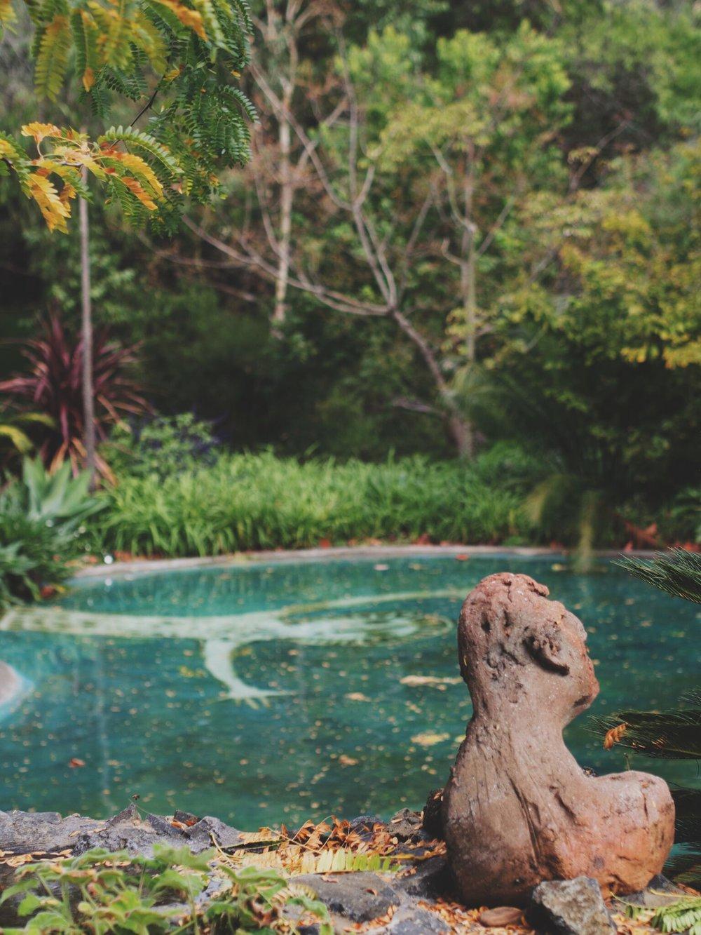 nature pool.jpeg