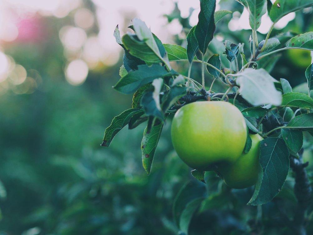 donnybrook apples