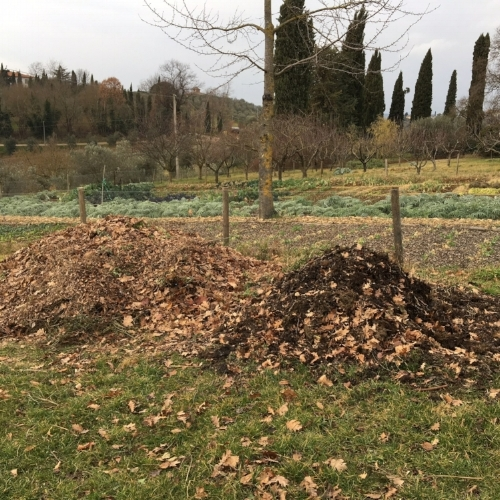 The dark compost is around 4 months old. The leaves and small branches are turning into humus, thanks to the action of fungus and bacteria.