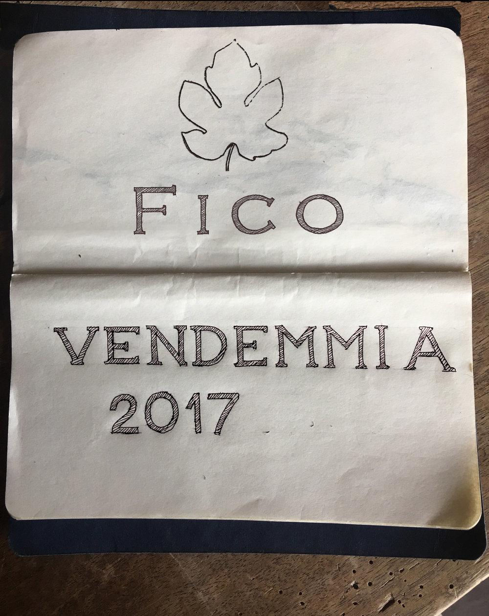 VENDEMMIA 2017_fico.jpg