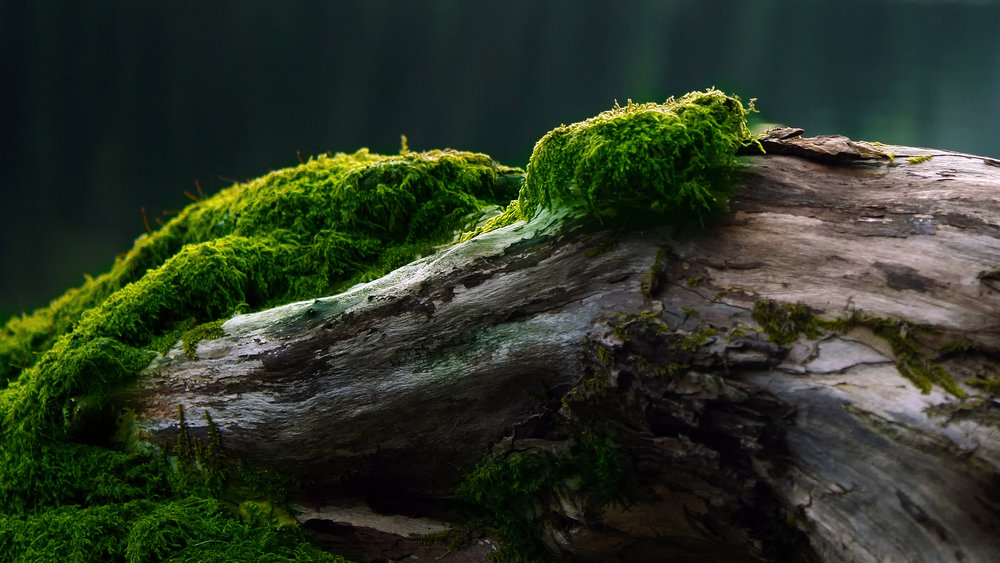 Bright-green-moss.jpg