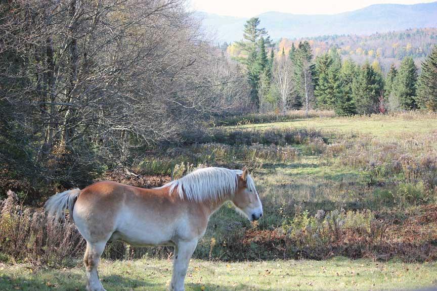 Craftsbury Horse