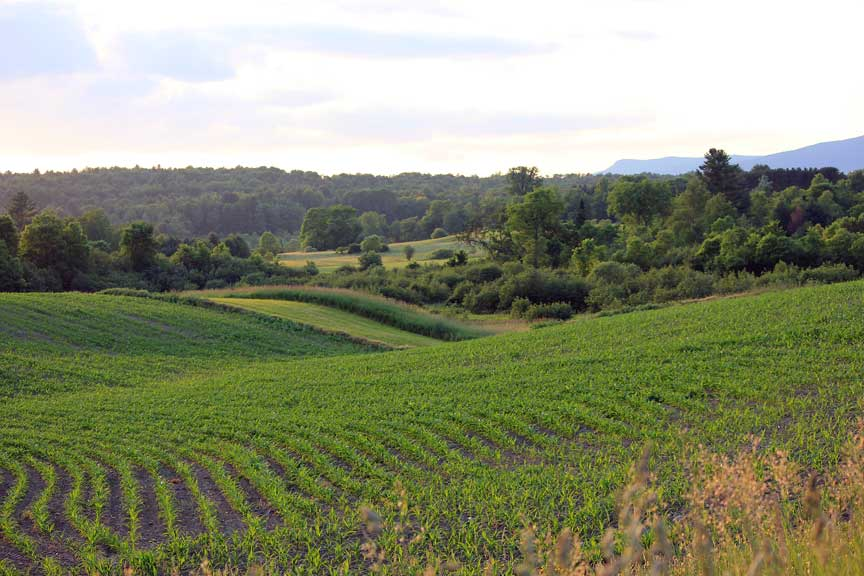 Hyde Park Farmland