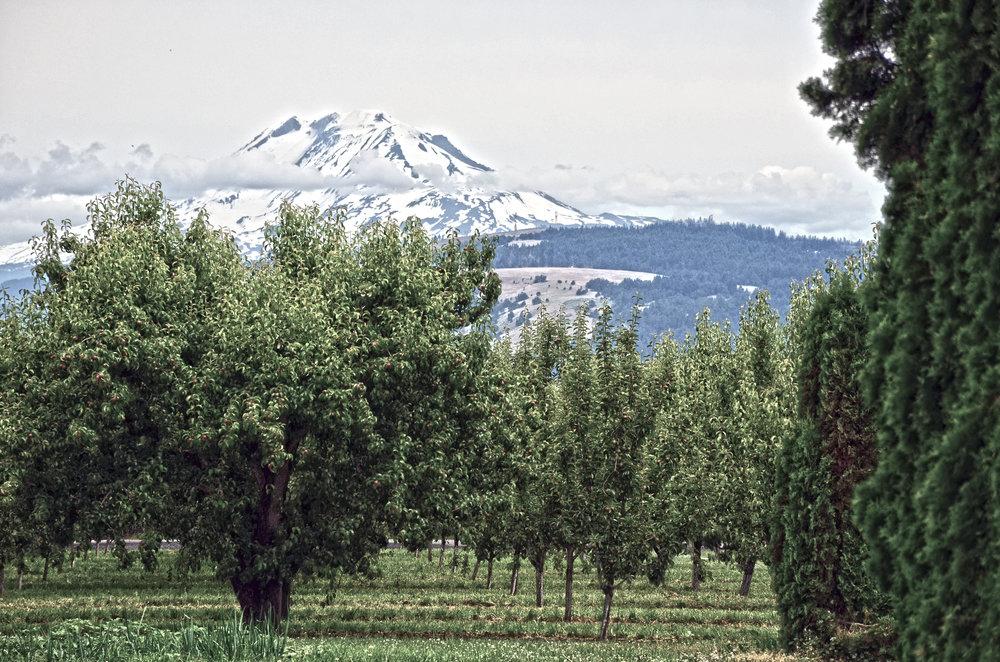 Pacific Northwest - Washington and Oregon Coast.