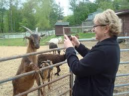 EHF goat.jpeg