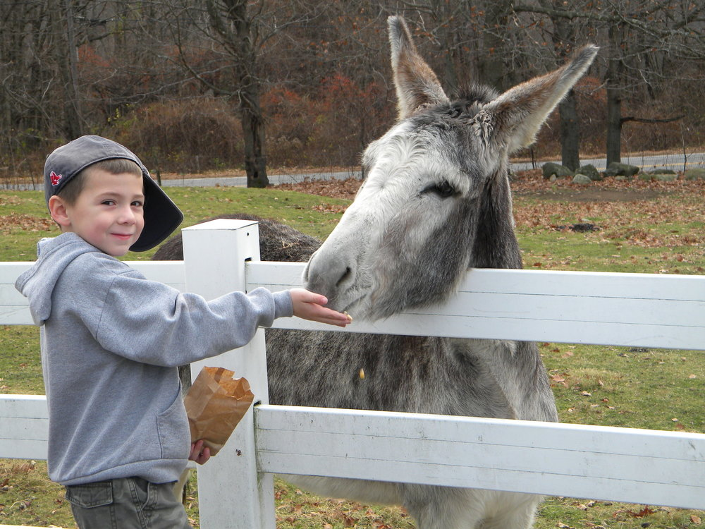 Boy Feeding the Donkey at The Inn at East Hill.jpg