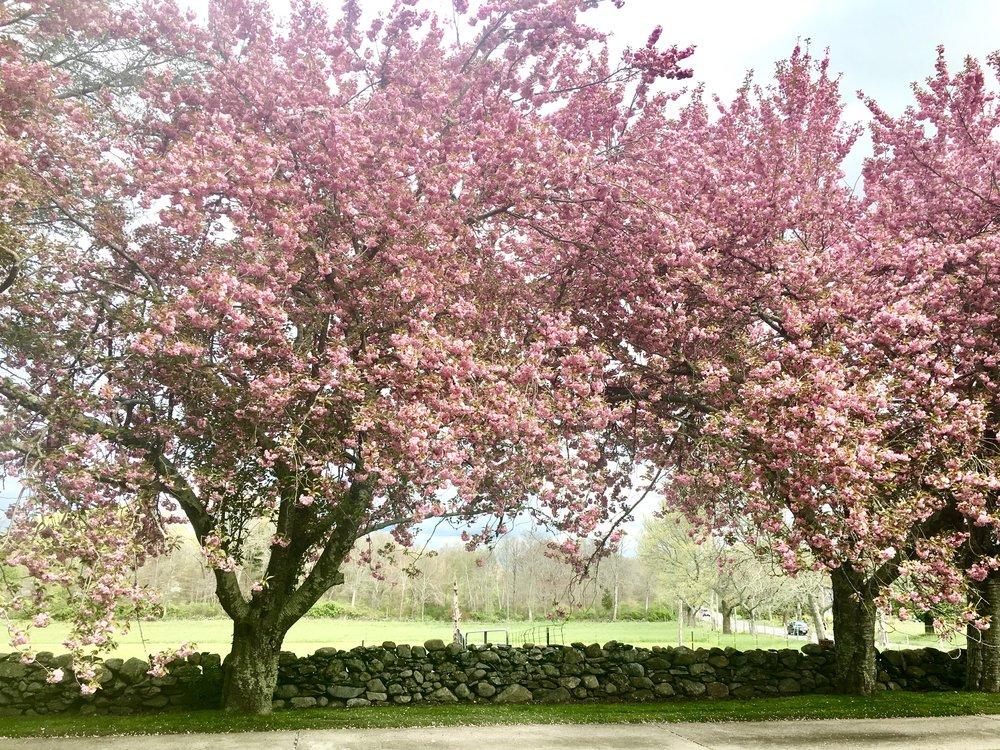 Quonset Trees.JPG