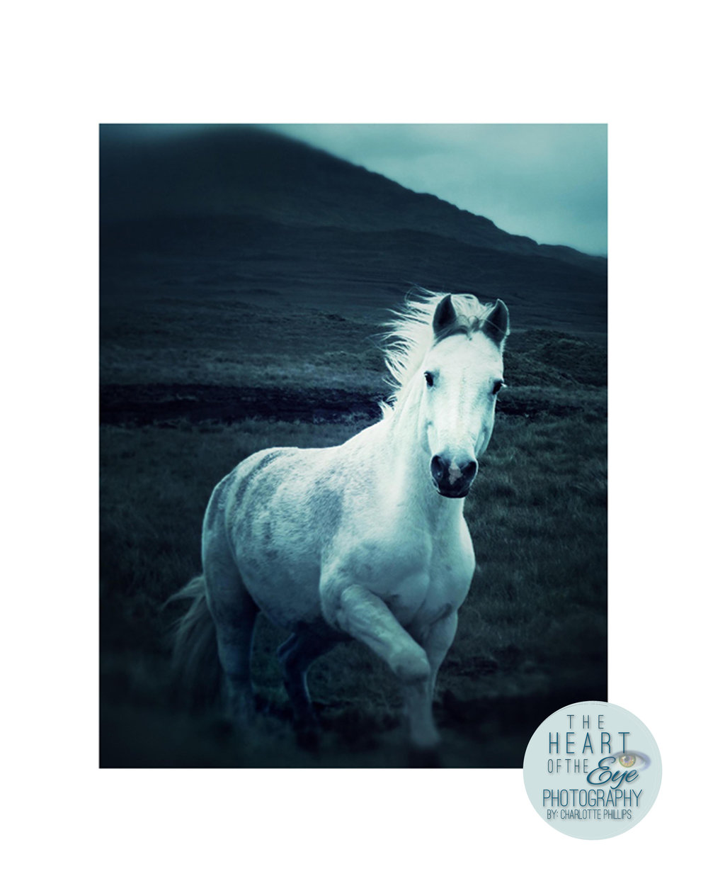 The Wild Horse of Connemara, Ireland