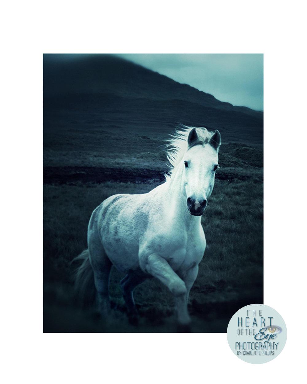 The Wild Horse of Connemara, Ireland