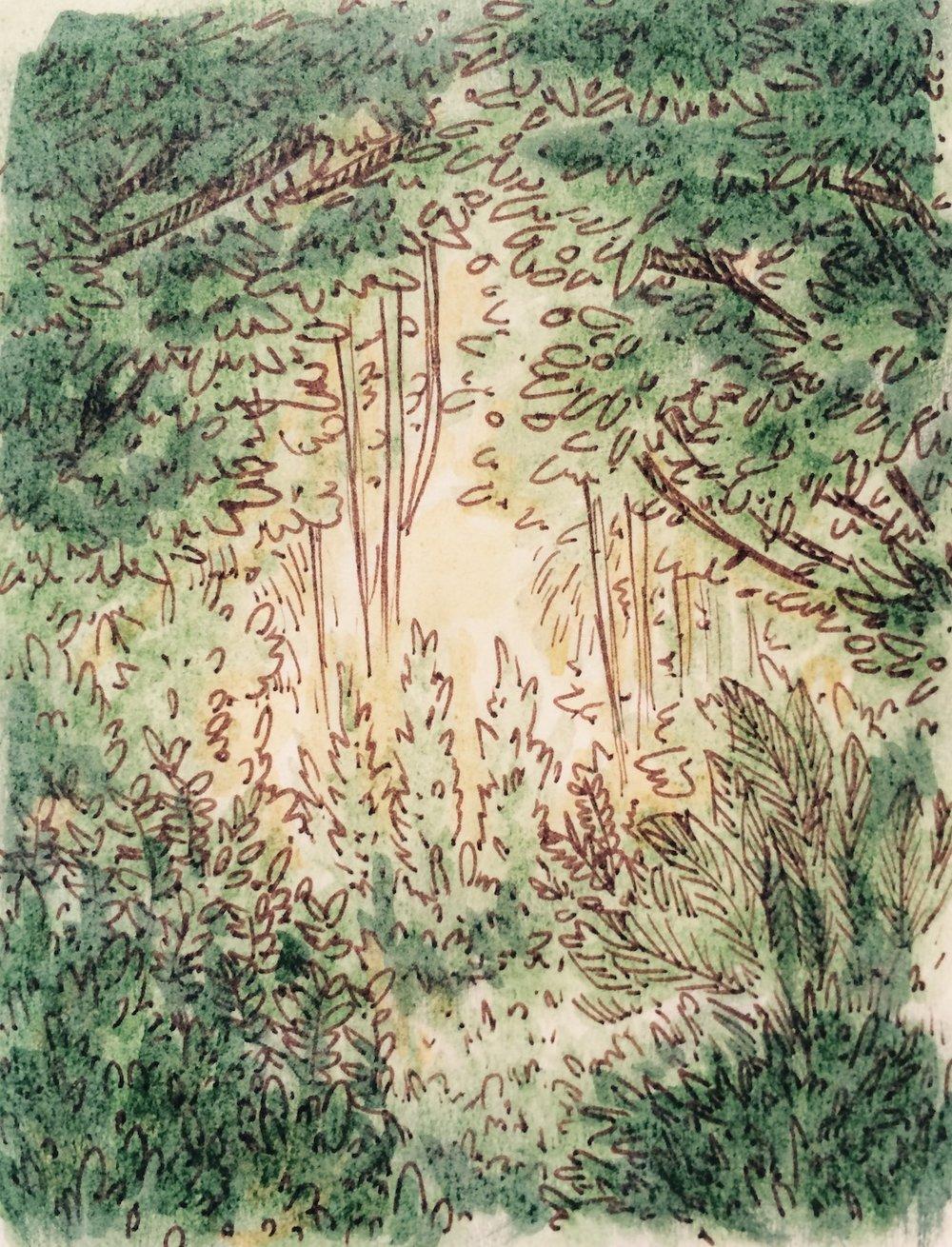 forest_sketch.jpg