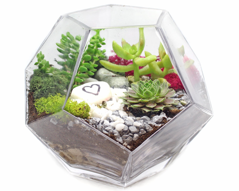 Succulents in Geometric Prism Glass Terrarium at Island Spice Grille and Lounge -   NOT A MASTER GARDENER?... NO PROBLEM!DON'T HAVE A GREEN THUMB?... IT'S ALL GOOD!  THERE IS NO EXPERIENCE REQUIRED!