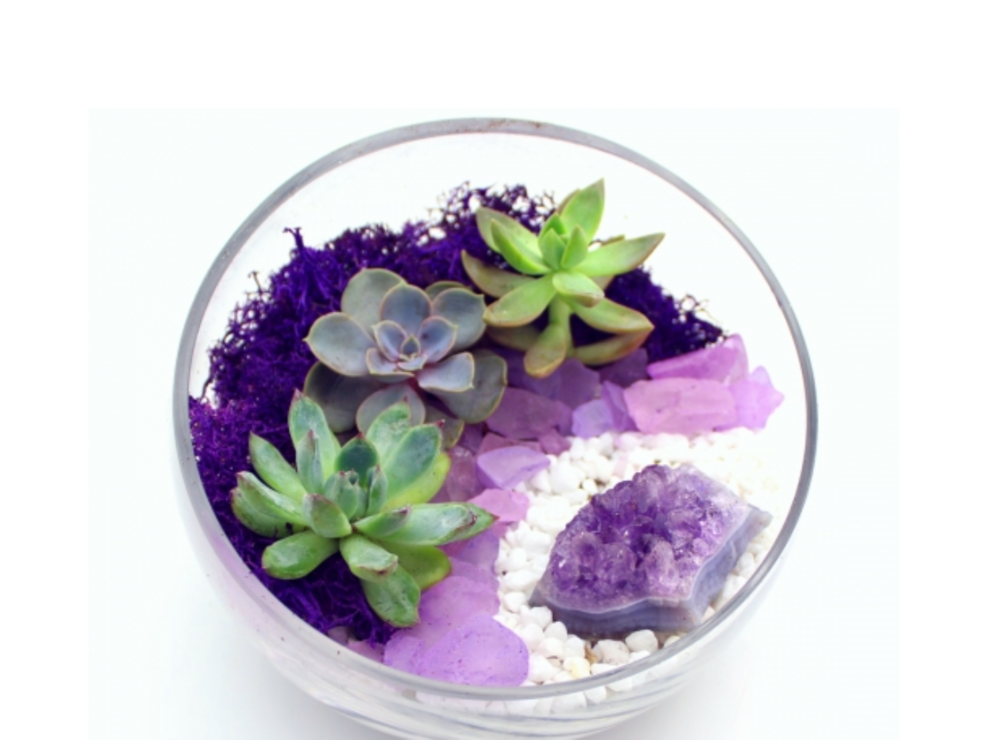 Succulent Terrarium in Half Cut Bowl with Amethyst Crystal - NOT A MASTER GARDENER?...NO PROBLEM!DON'T HAVE A GREEN THUMB?...IT'S ALL GOOD! THERE IS NO EXPERIENCE REQUIRED!
