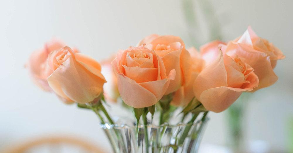 Pastel-orange-roses.jpg