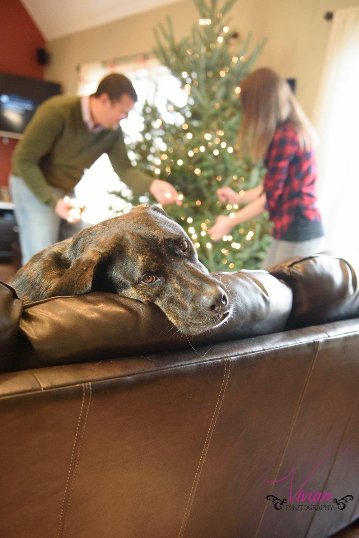 dog-lounging-couple-decorating-christmas-tree-background.jpg