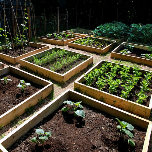 We design a custom garden that works with your needs, free time and available space. Choose between one planter box or create your own urban farm!