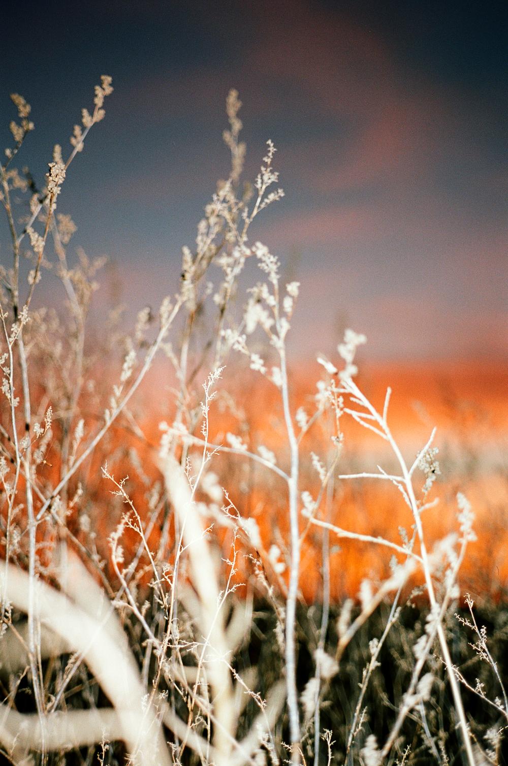 farmweeds.png