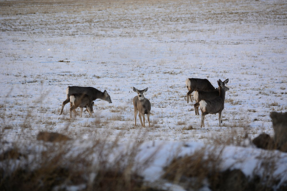 Dull, colorless, out of focus boring deer